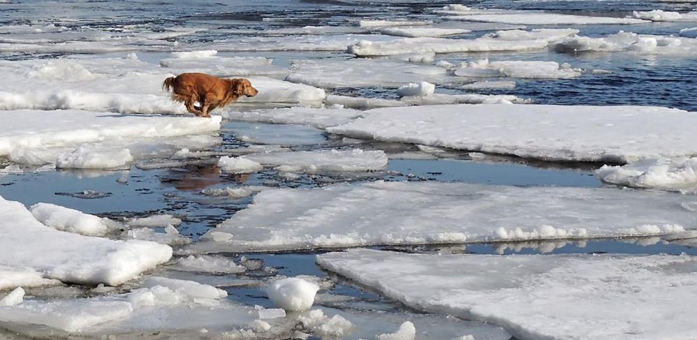 Dog and ice water